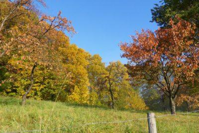 Denkspaziergang - Draußen im Grünen - Farbenspaziergang