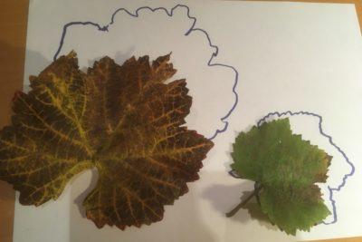 Denkspaziergang - Laub- und Blättersammeln